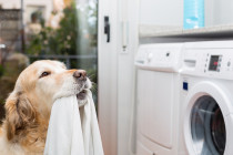 Why energy efficiency in the home starts with the laundry room