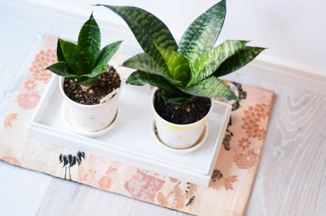 Benefits of Houseplants for Clean Air