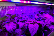 LEDs take greenhouses into the future