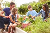 Environmentally friendly veggie gardens