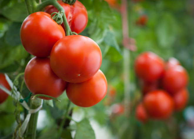 LEDs are Lighting the Way to More Efficient Food Production