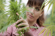 Industrial Hemp Cultivation: A Budding Industry in the United States