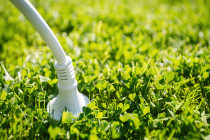 A whole new flower power: New advances in harvesting electricity from plants