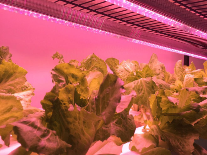Why We Love LED Grow Lights (And You Should, Too!)