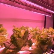 Mission LED Grow Lights