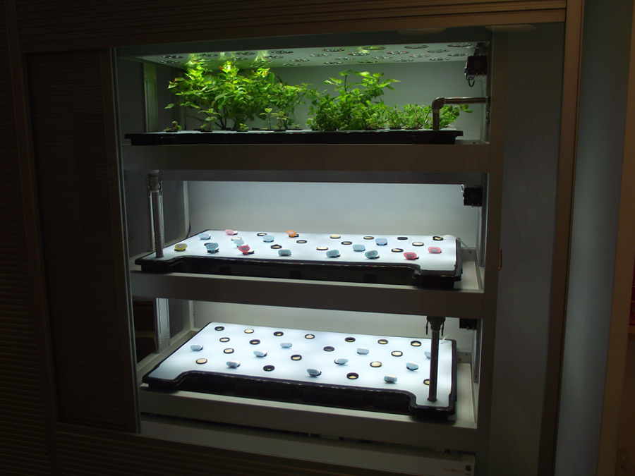 Grow Your Garden Without Sunlight With Led Grow Lights