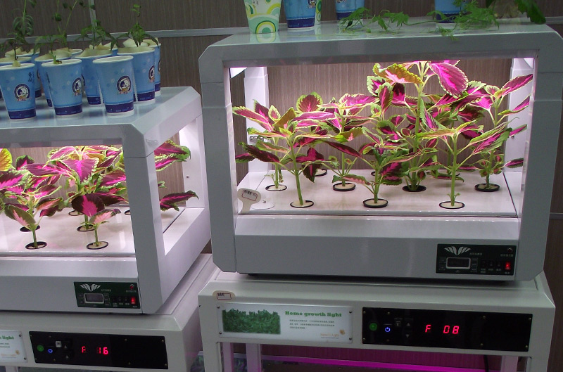 Nursery with Mission LED Grow Lights